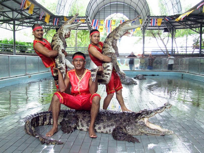 Crocodile fern